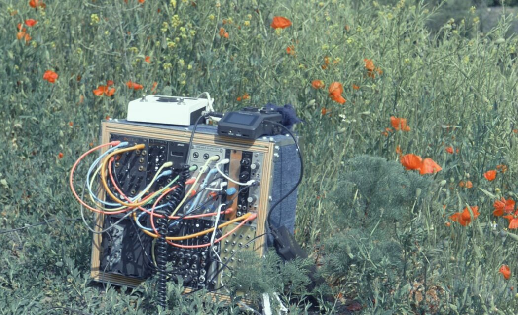 Music with plant by Xavier Gazon